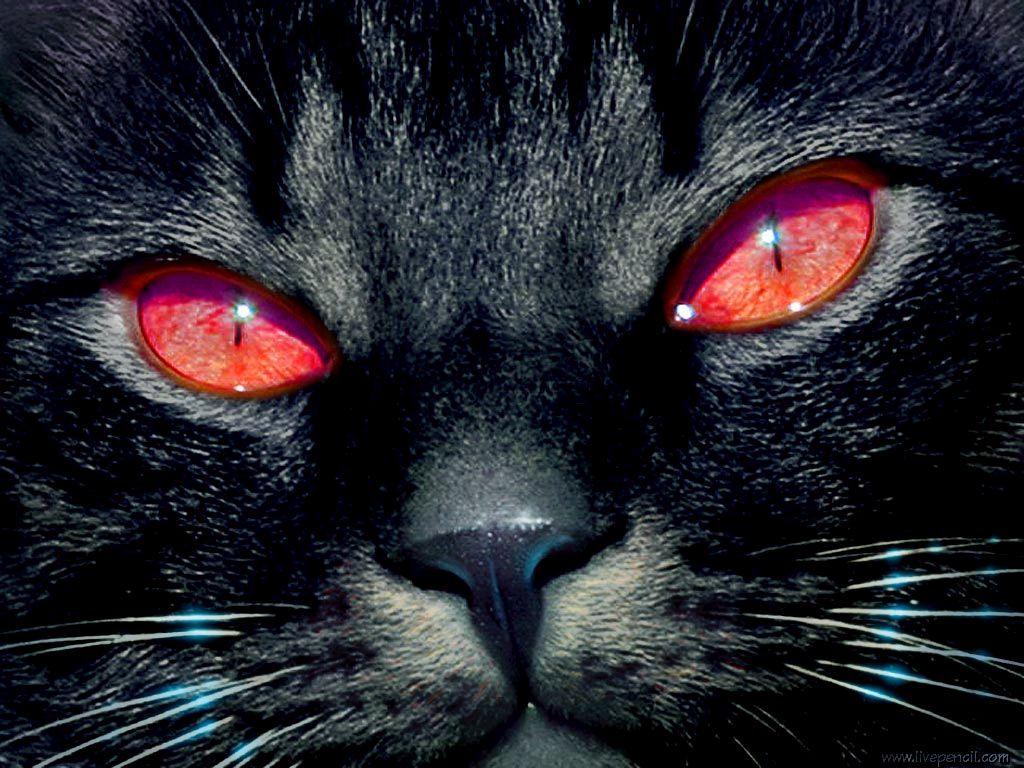 Картинка чорний кіт з червоними очима
