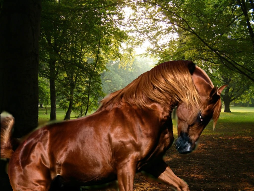 Bild das pferd in den wald kostenlose desktop wallpaper und bilder