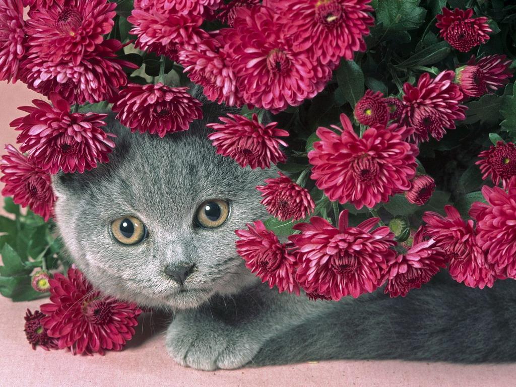 В букеті червоних квітів картинки