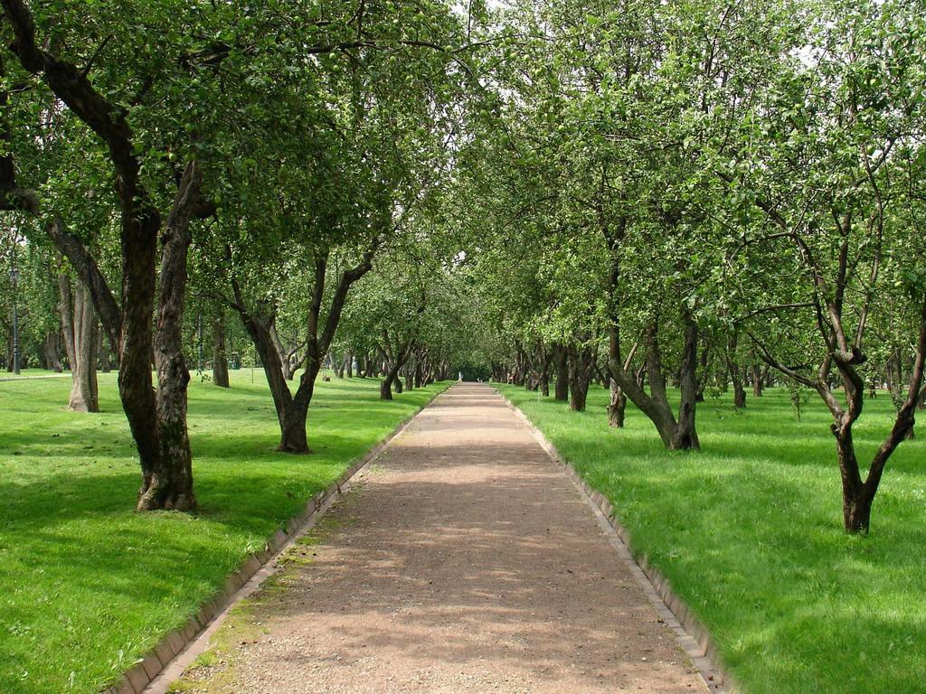 Яблоневый сад фоновые рисунки на