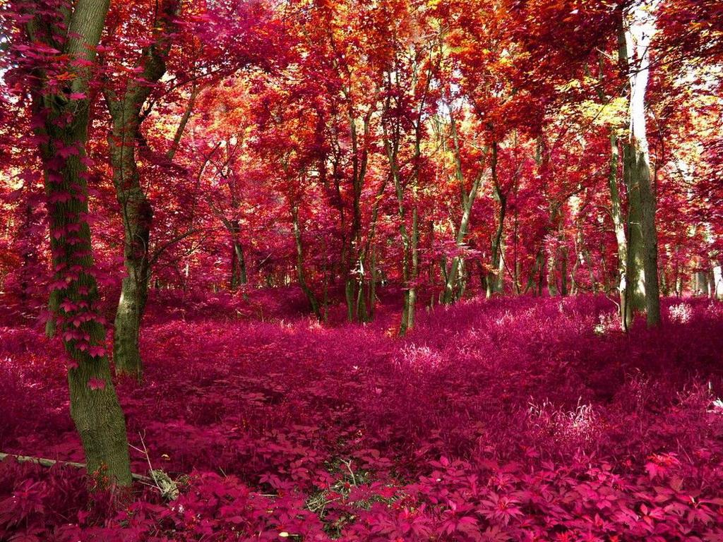 Сказочный лес гламурные картинки