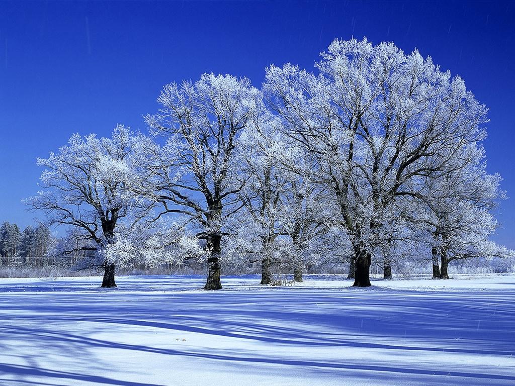 Зимний пейзаж деревьев в иней лучшие