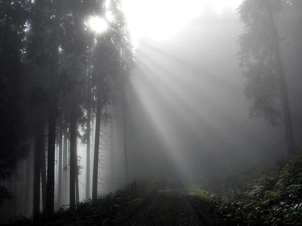 Обои 1024x768 утренний туман в лесу
