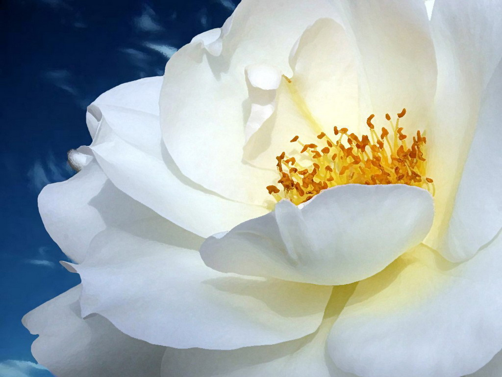Картинки белый цветок 3