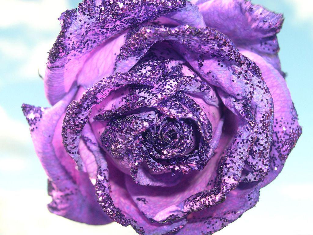 Смотреть картинки онлайн бесплатно цветы 3