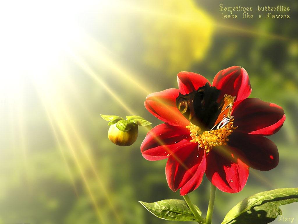 Цветок счастья картинки 3