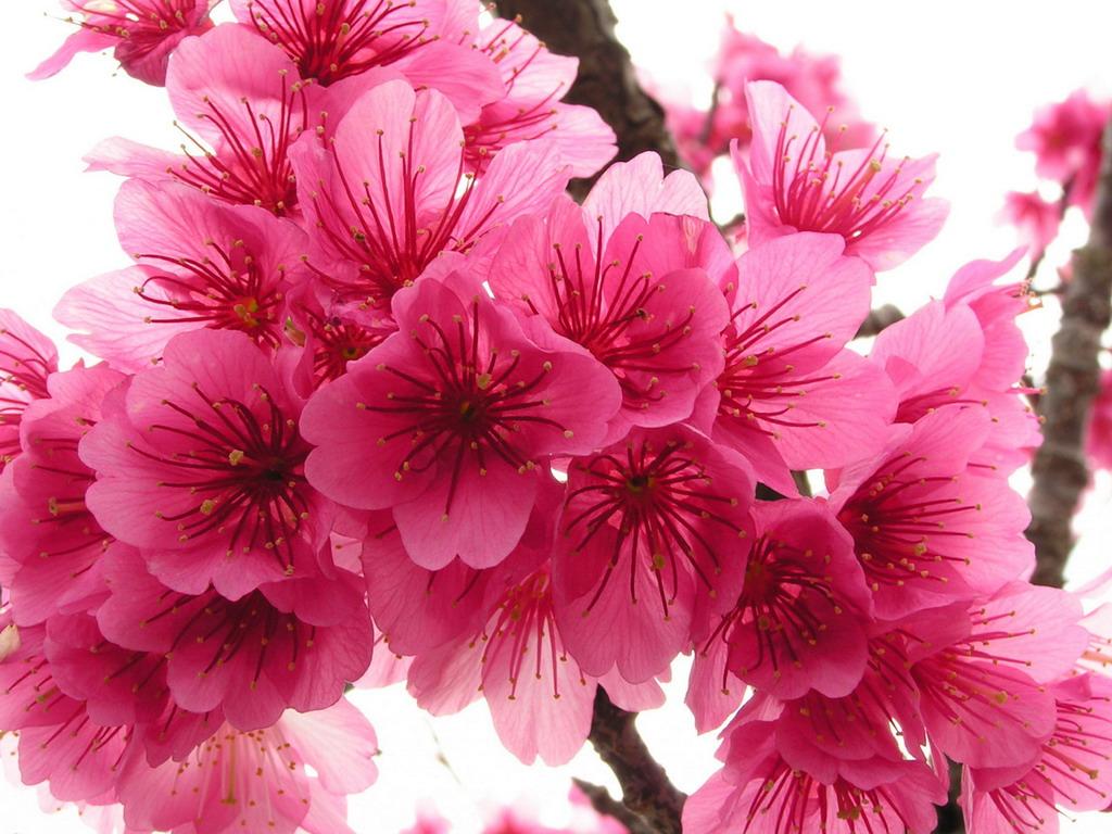 Картинки на робочий стіл тема квіти