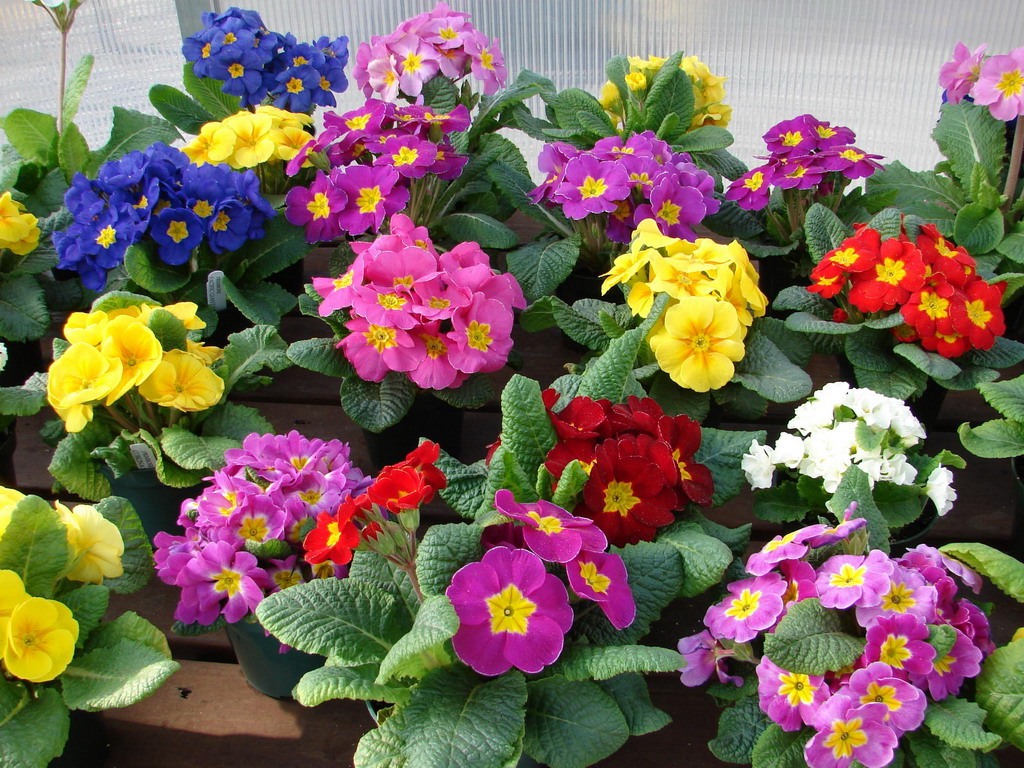 Картинки очень красивых цветов букеты 6