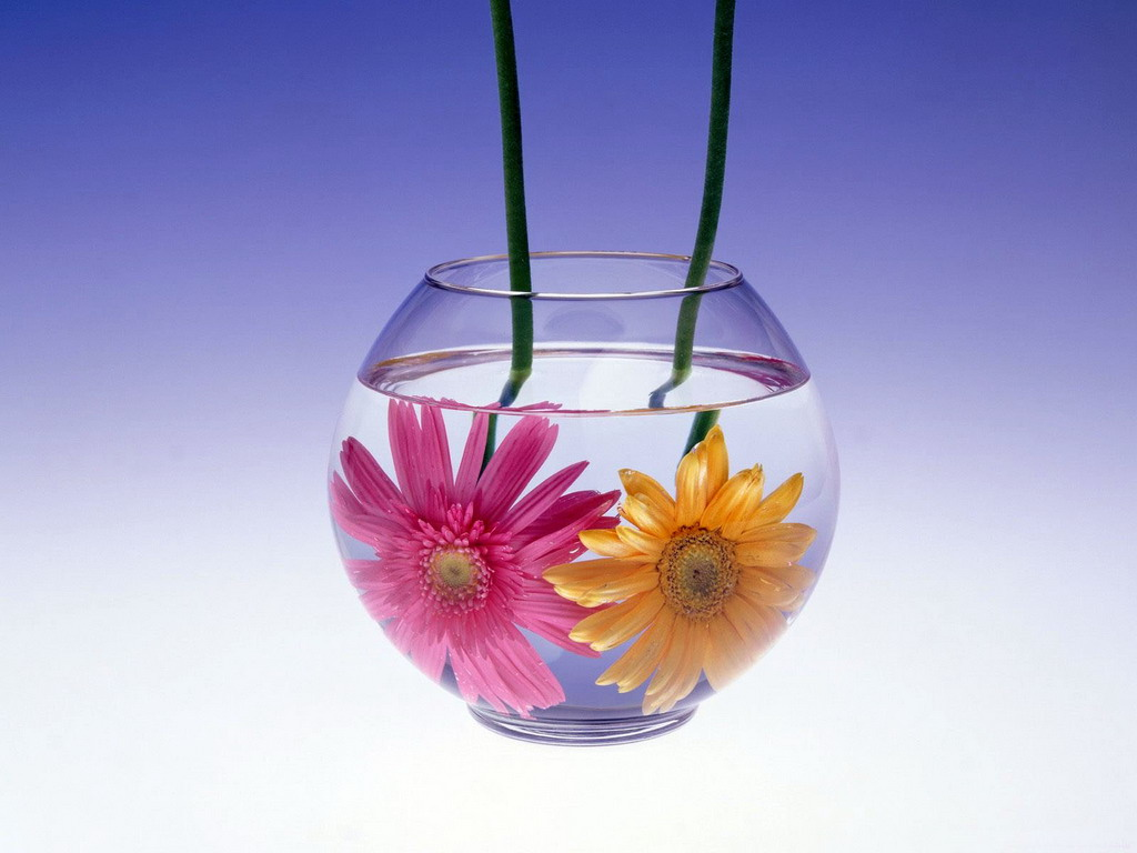 Найти цветок по картинке 3