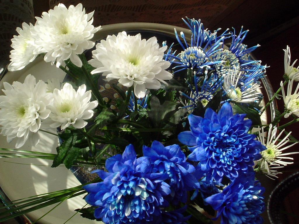 Большие картинки цветов 1