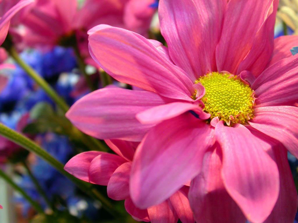 Красивые цветы для детей картинки 8