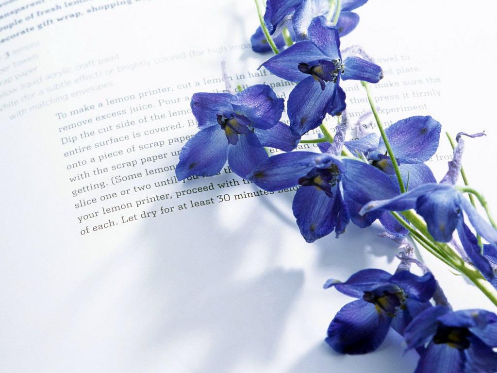 Цветы на письме картинки и рисунки