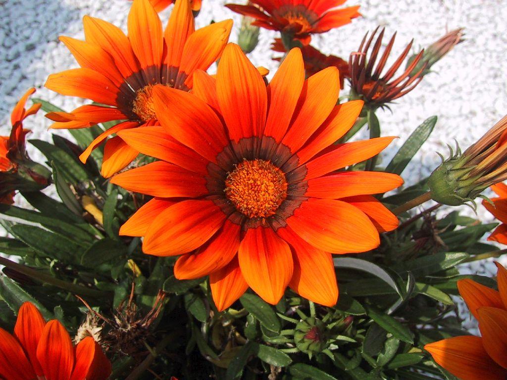 Большие картинки цветов 5