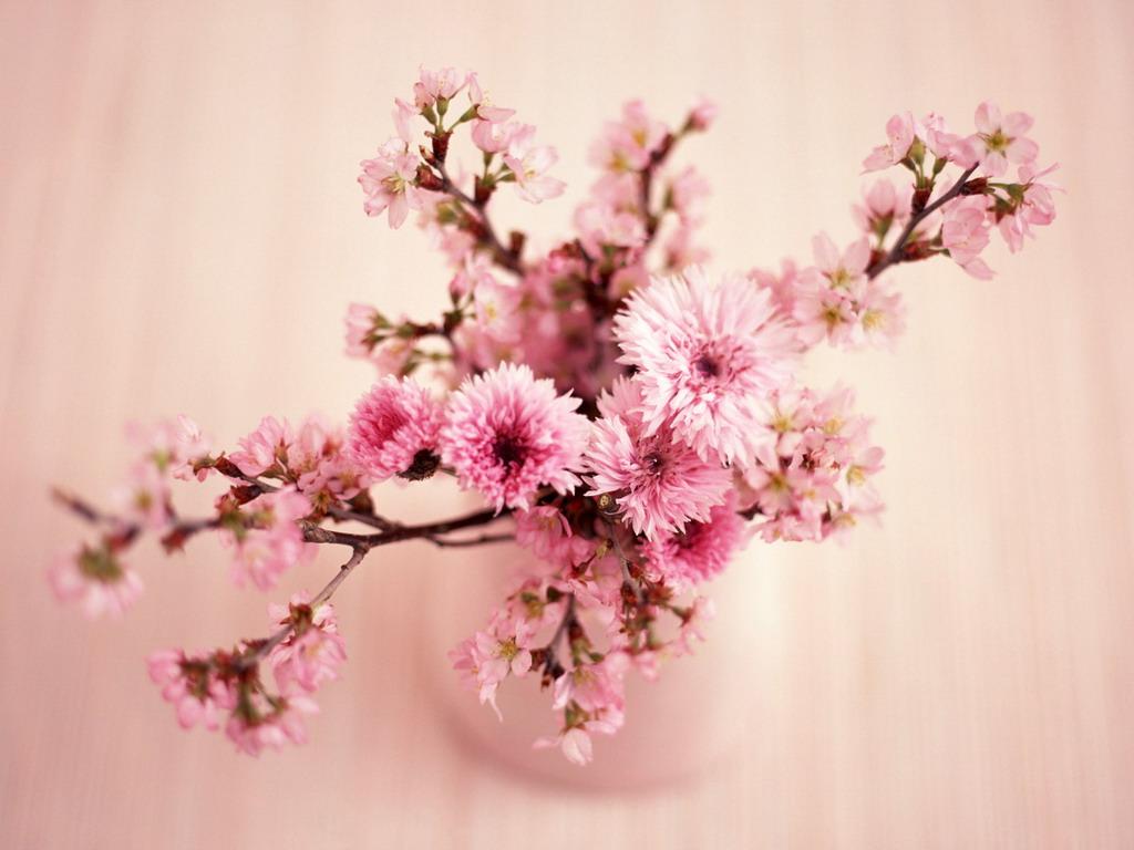 Красота цветов картинки 7