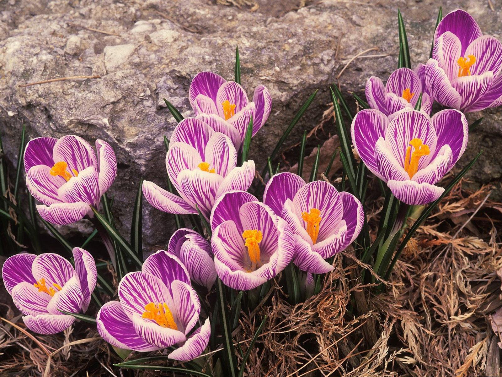 Яркие и красивые цветы обои