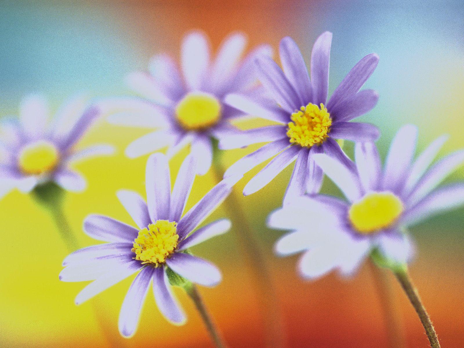 Красивые цветы и краски весны