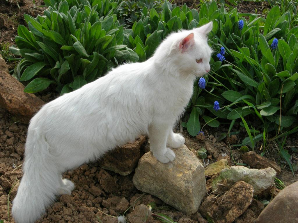 Удобное средство для снятия стресса Пушистая кошка с зеленым