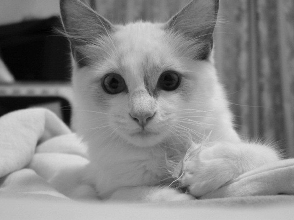 Котяче умивання, шпалери для робочого