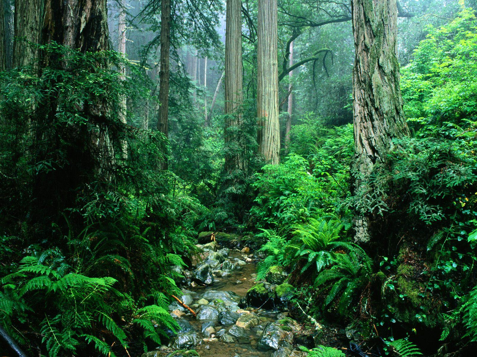 Великолепная природа в лесу супер