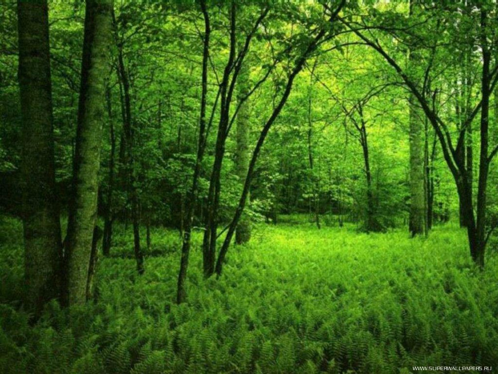 conservation of forest for a happy future