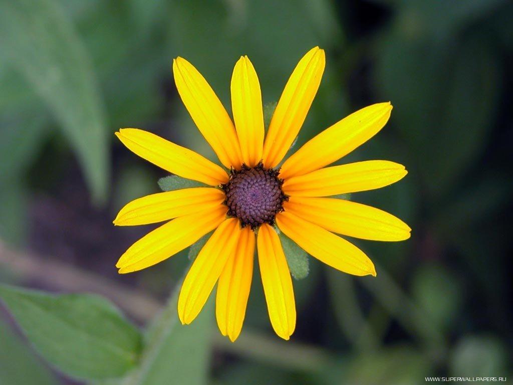 Цветок небольшое фото