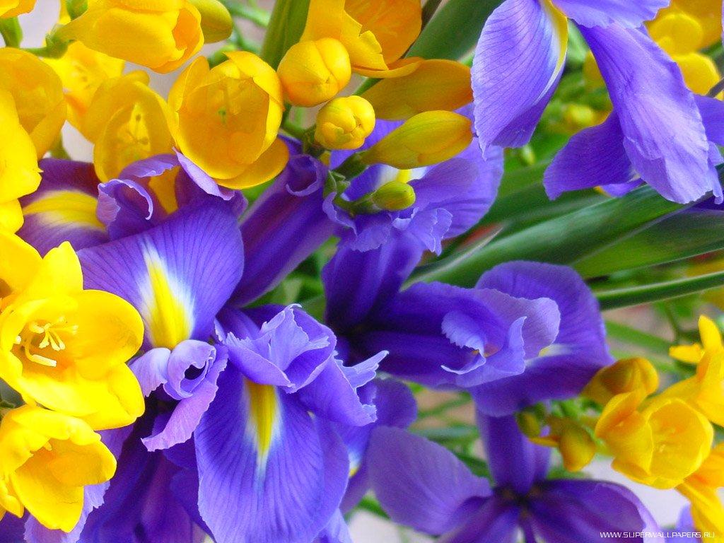 Het beeld bloemen foto s achtergrond bureaublad behang met bloemen
