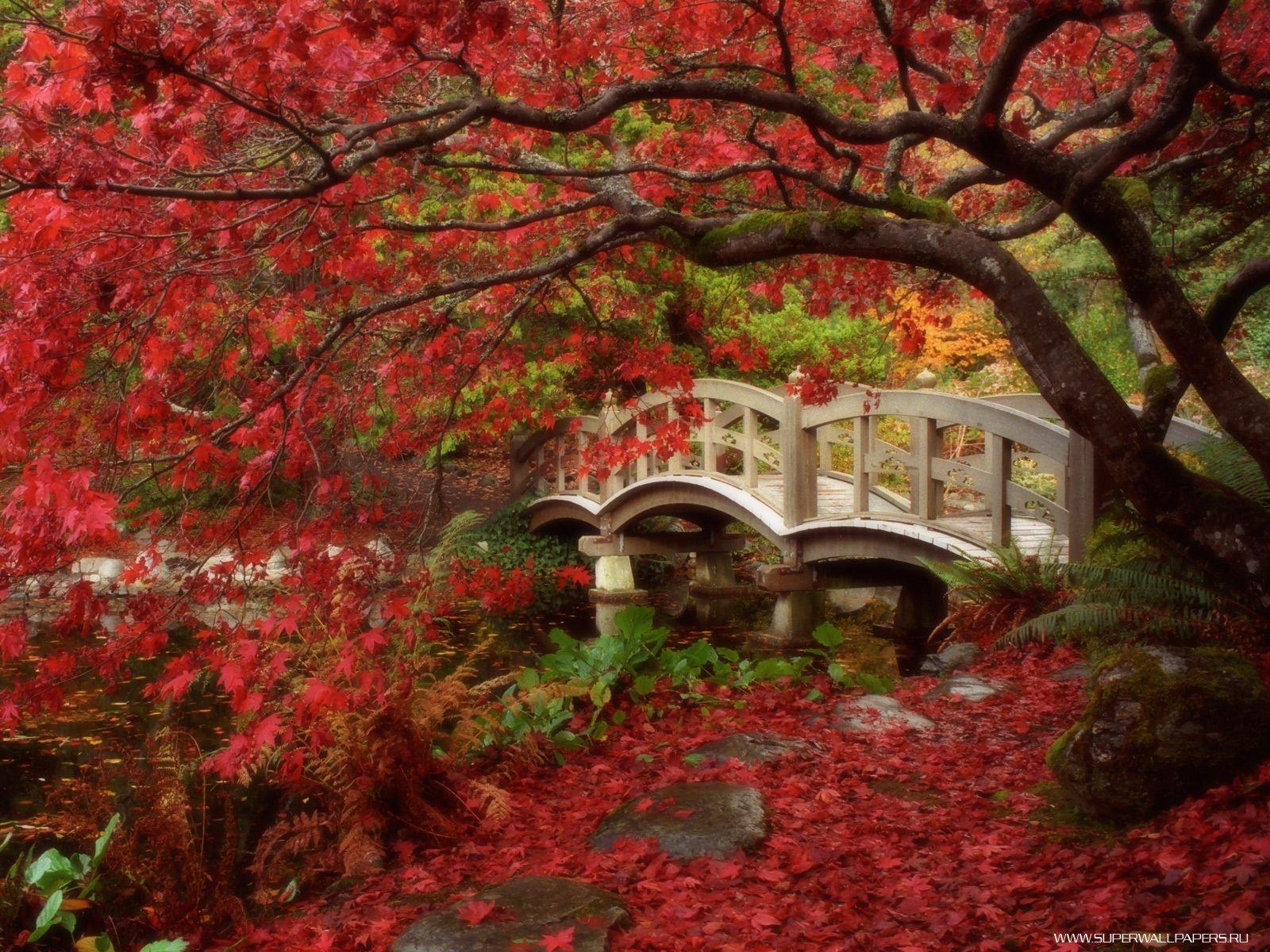 Японский сад картинки