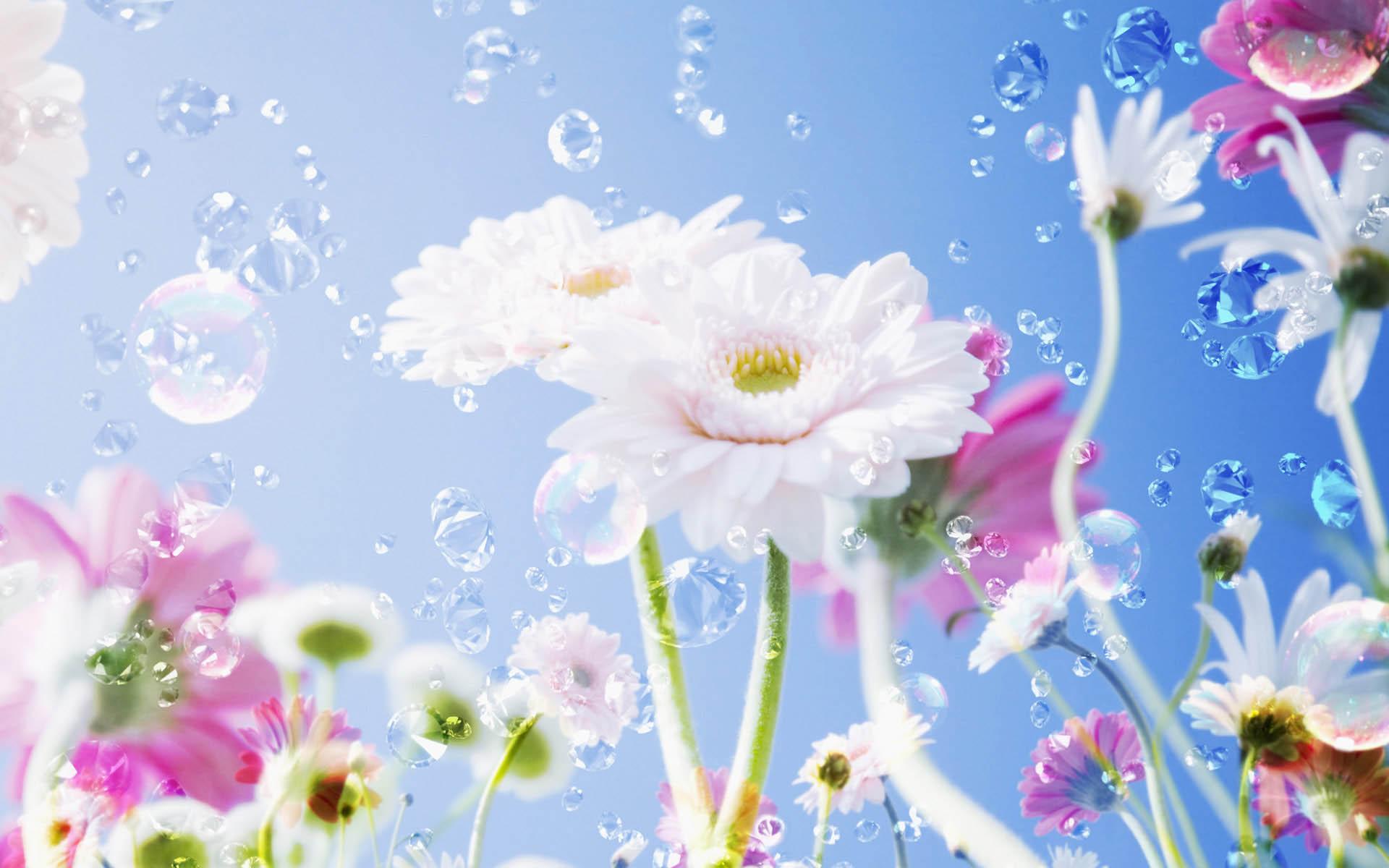 Квіти 7 картинки завантажити шпалери