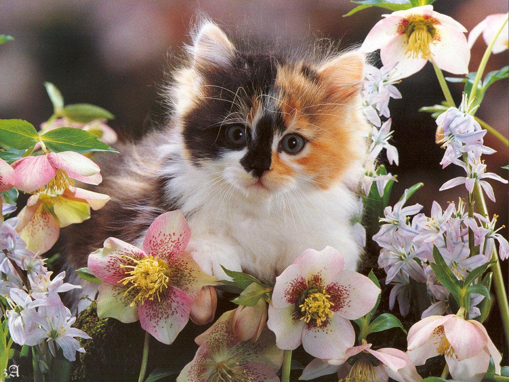 Котик с цветами картинки 4