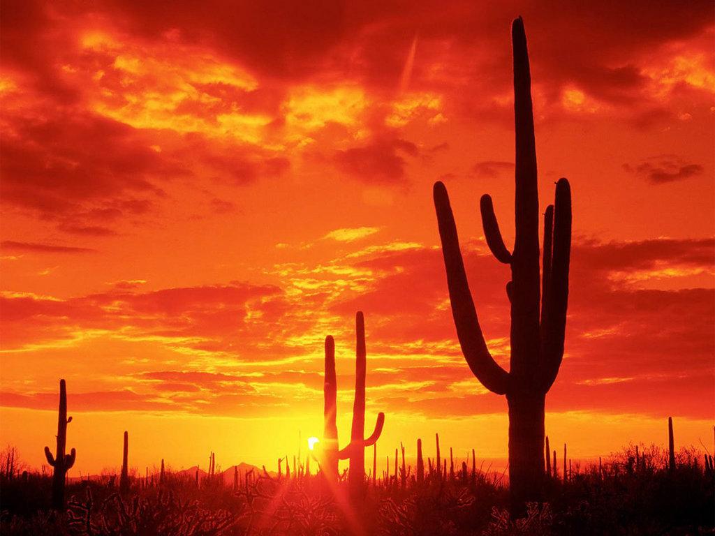 ... картинки и новые обои на рабочий стол: картинки.cc/закат-в-пустыне-картинки...