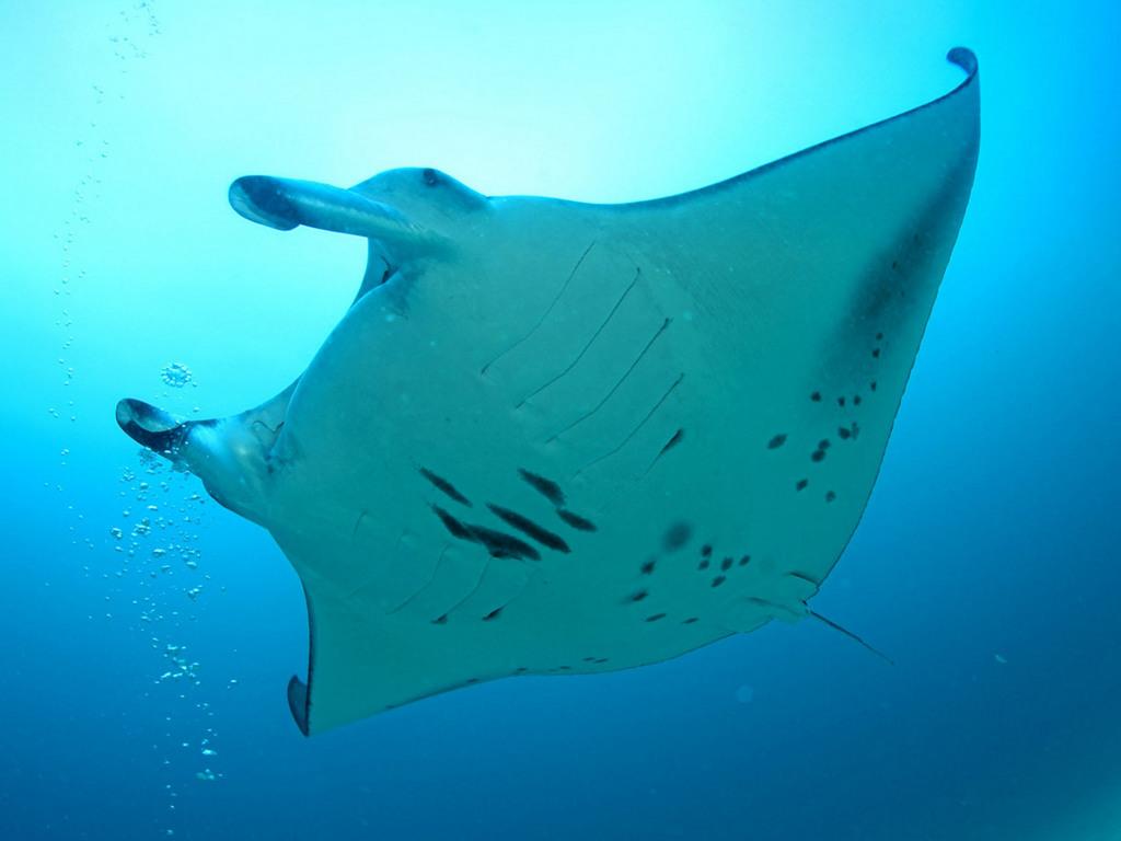 Підводний світ картинки безкоштовно