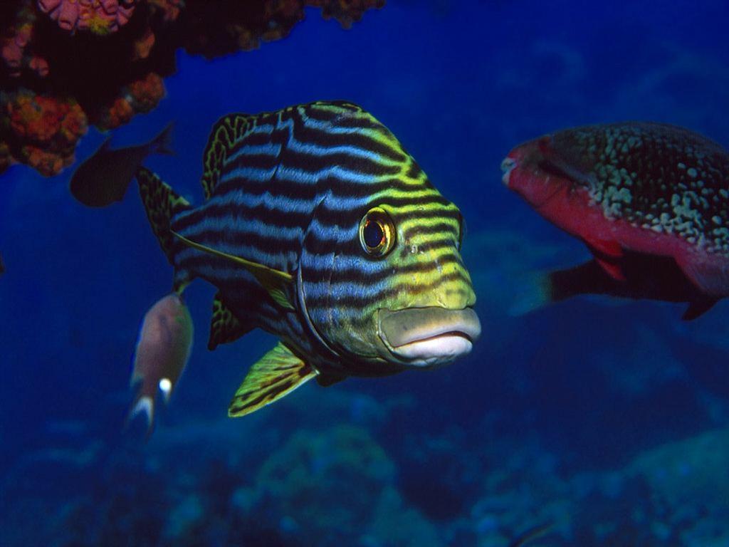 Bild underwater world wallpaper zum kostenlosen download auf ihren