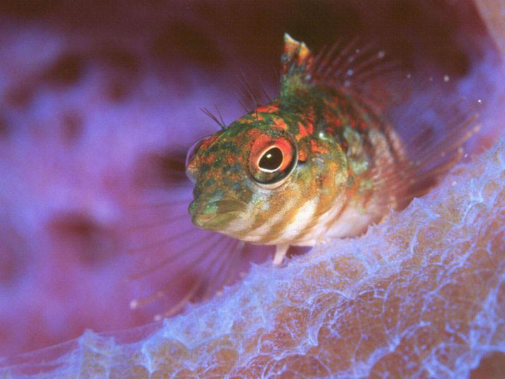 дошкольников для подводный картинки мир