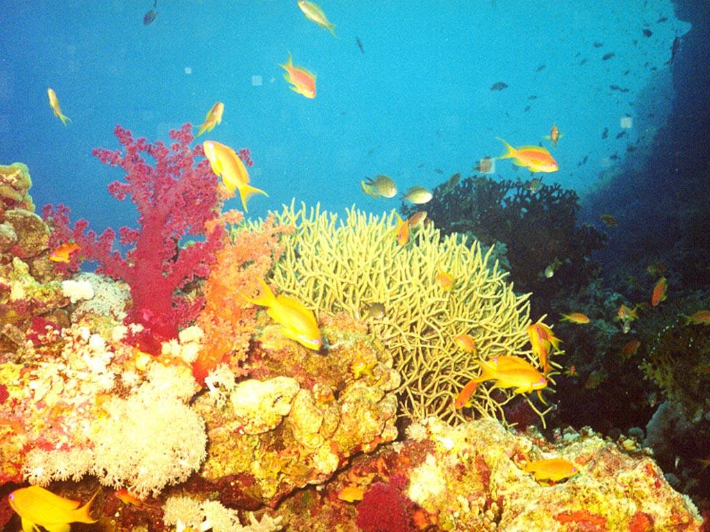 Подводный мир обои