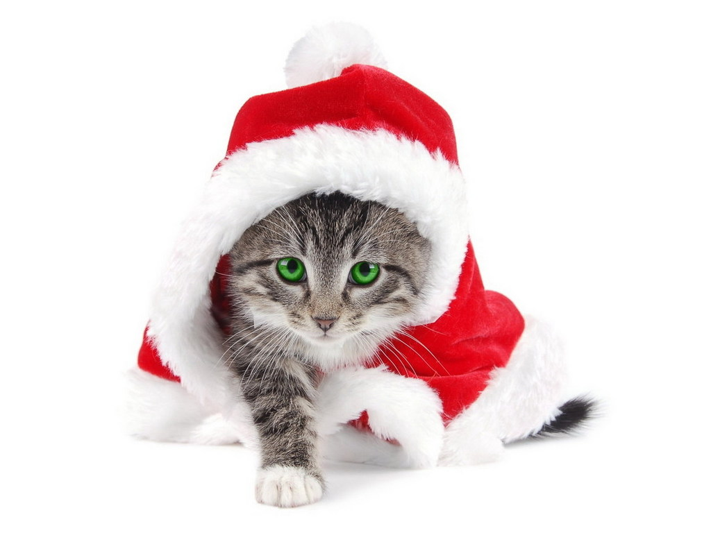 Immagine, immagini buon anno nuovo, screensaver gratis →