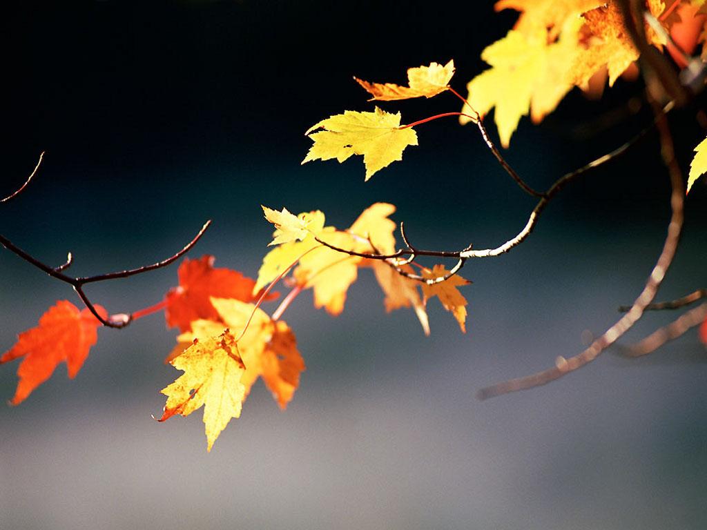 Осенние картинки на рабочий стол самые красивые - 4bf3c
