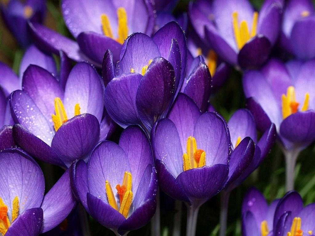 Картинки на заставку телефона цветы 7