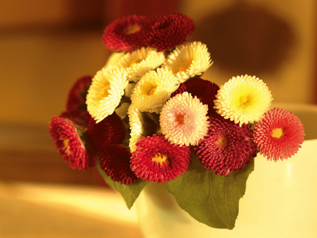 Милые картинки цветов 2
