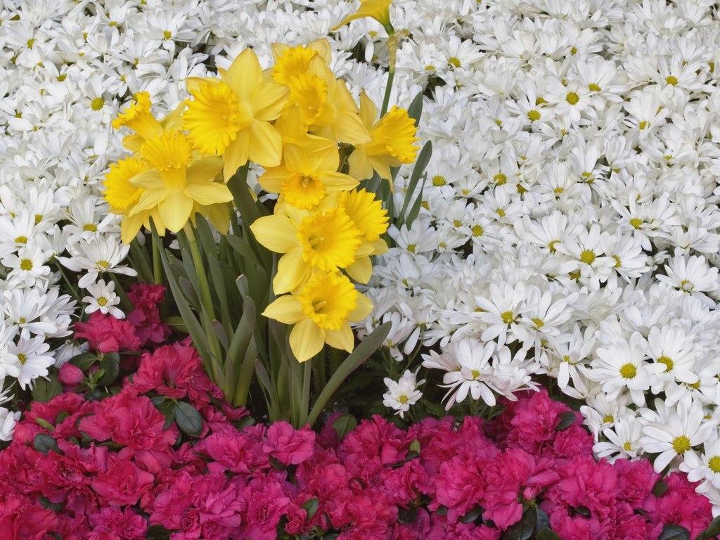 Список цветов с картинками 5