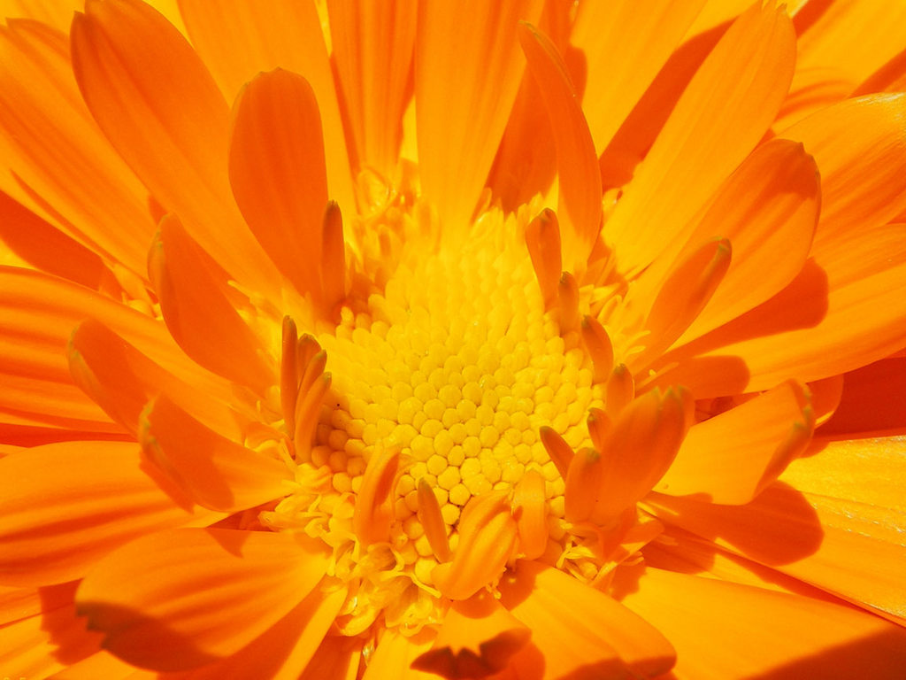 Красивые картинки оранжевого цвета 7