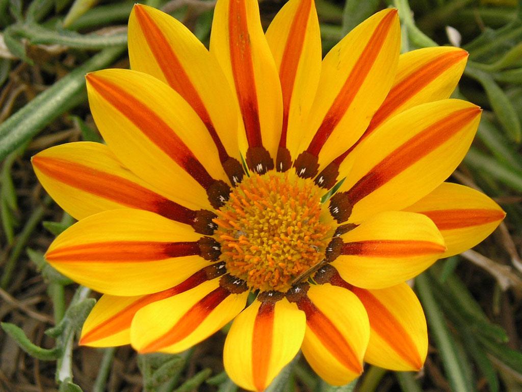 Однолетние цветы картинки 8