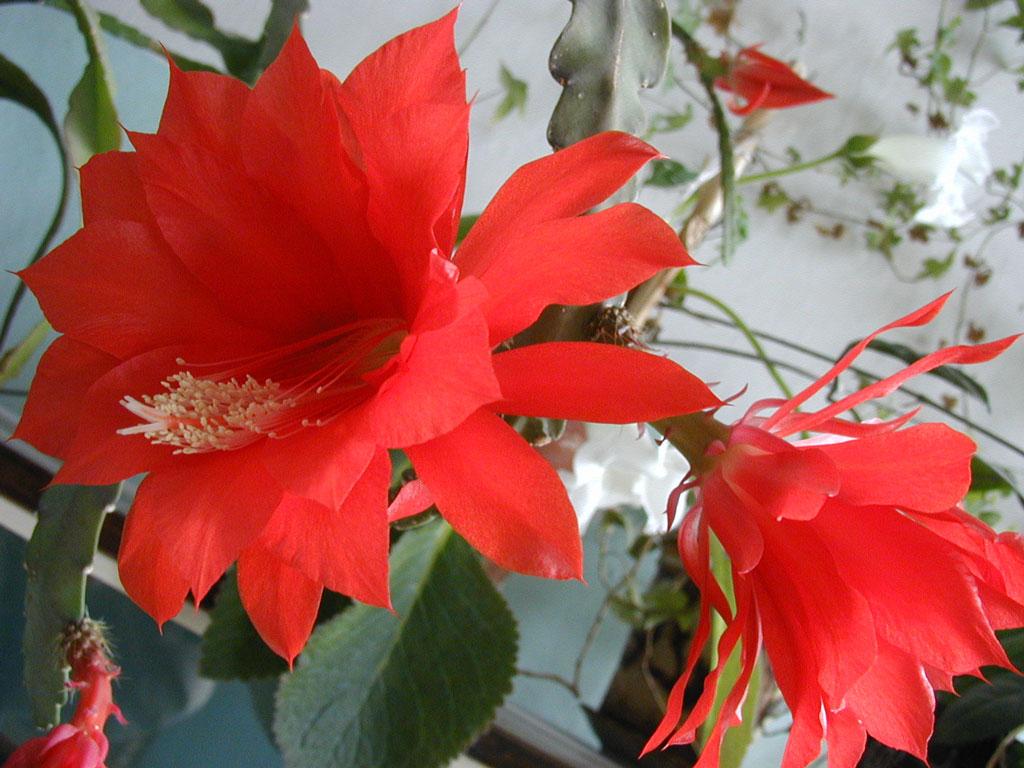 Картинки для форумов цветы 8