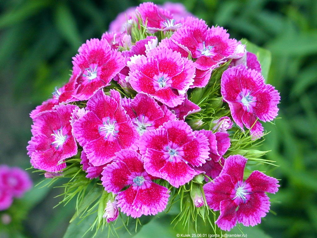 Картинки на телефон природа цветы 3