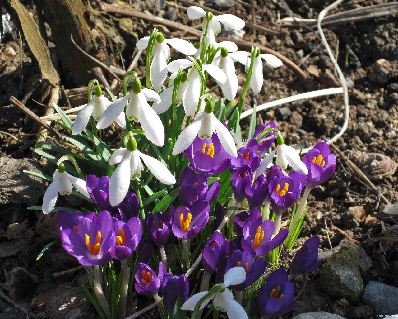 Картинки на рабочий стол про весну большие