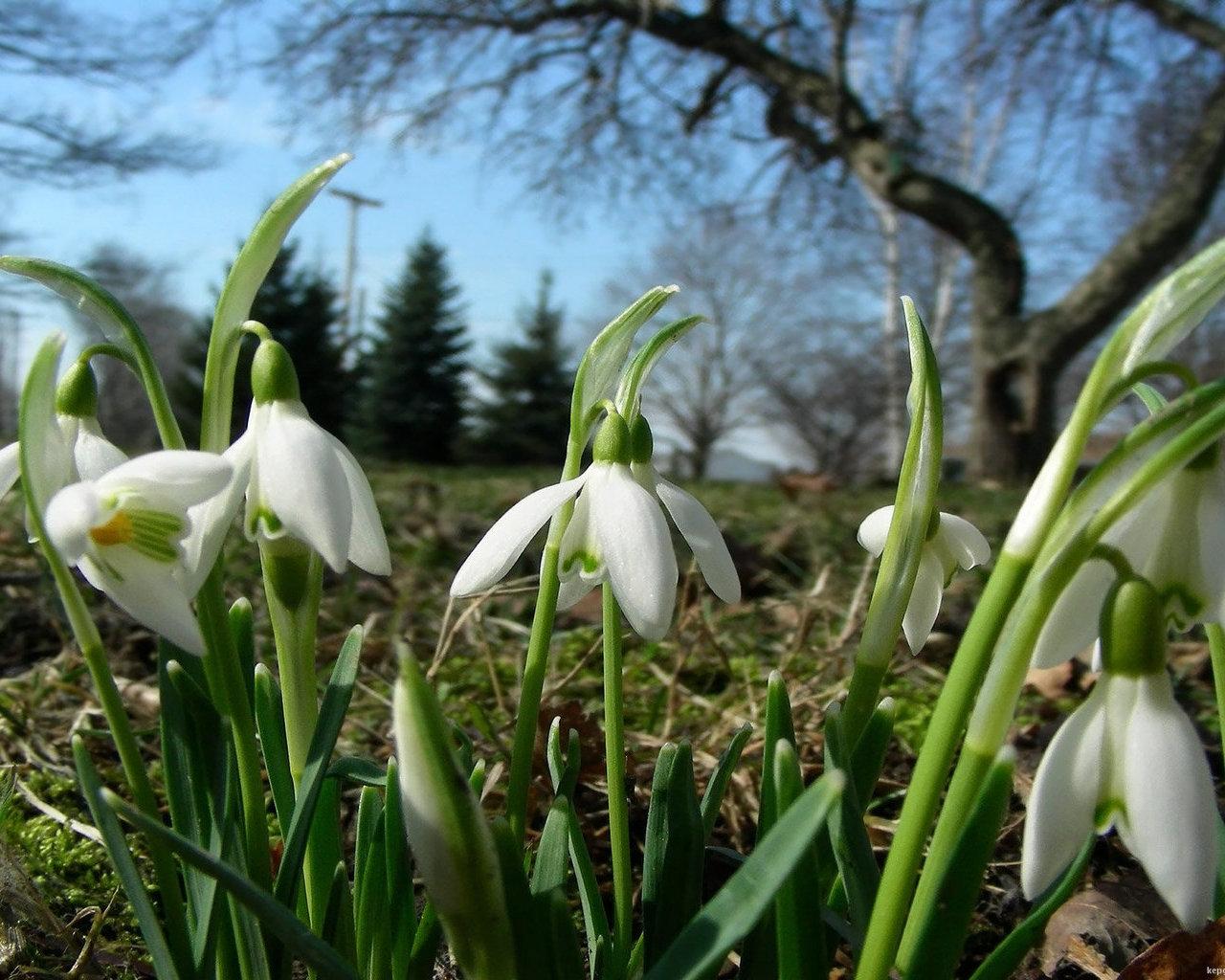 Весняна галявина шпалери і фото на