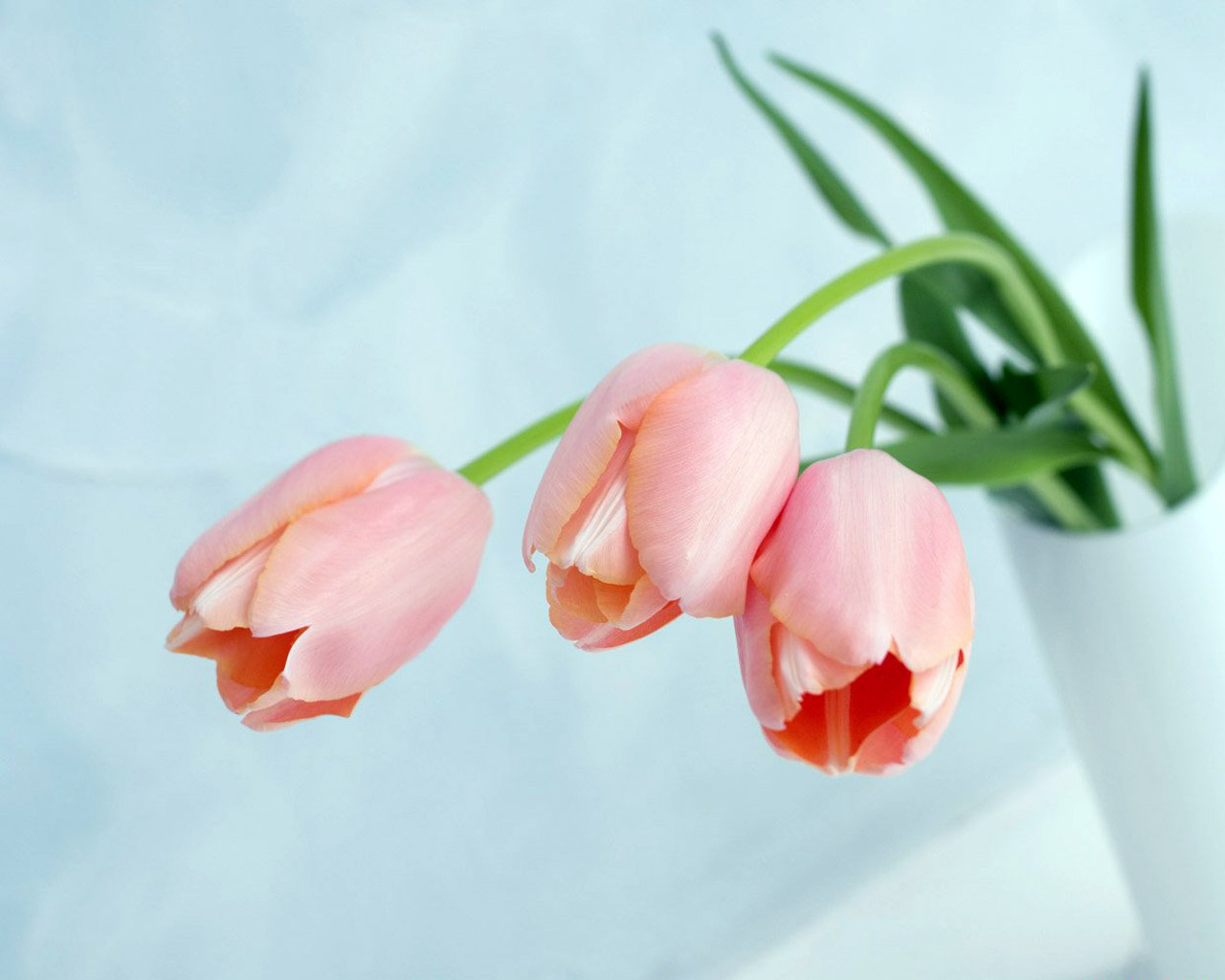 Картинки квіти весняні квіти