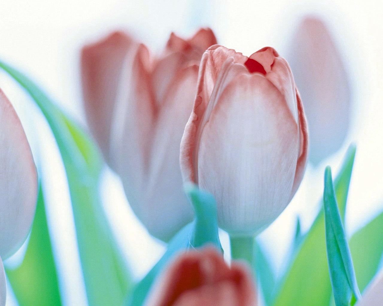 Цветы весенние цветы скачать обои