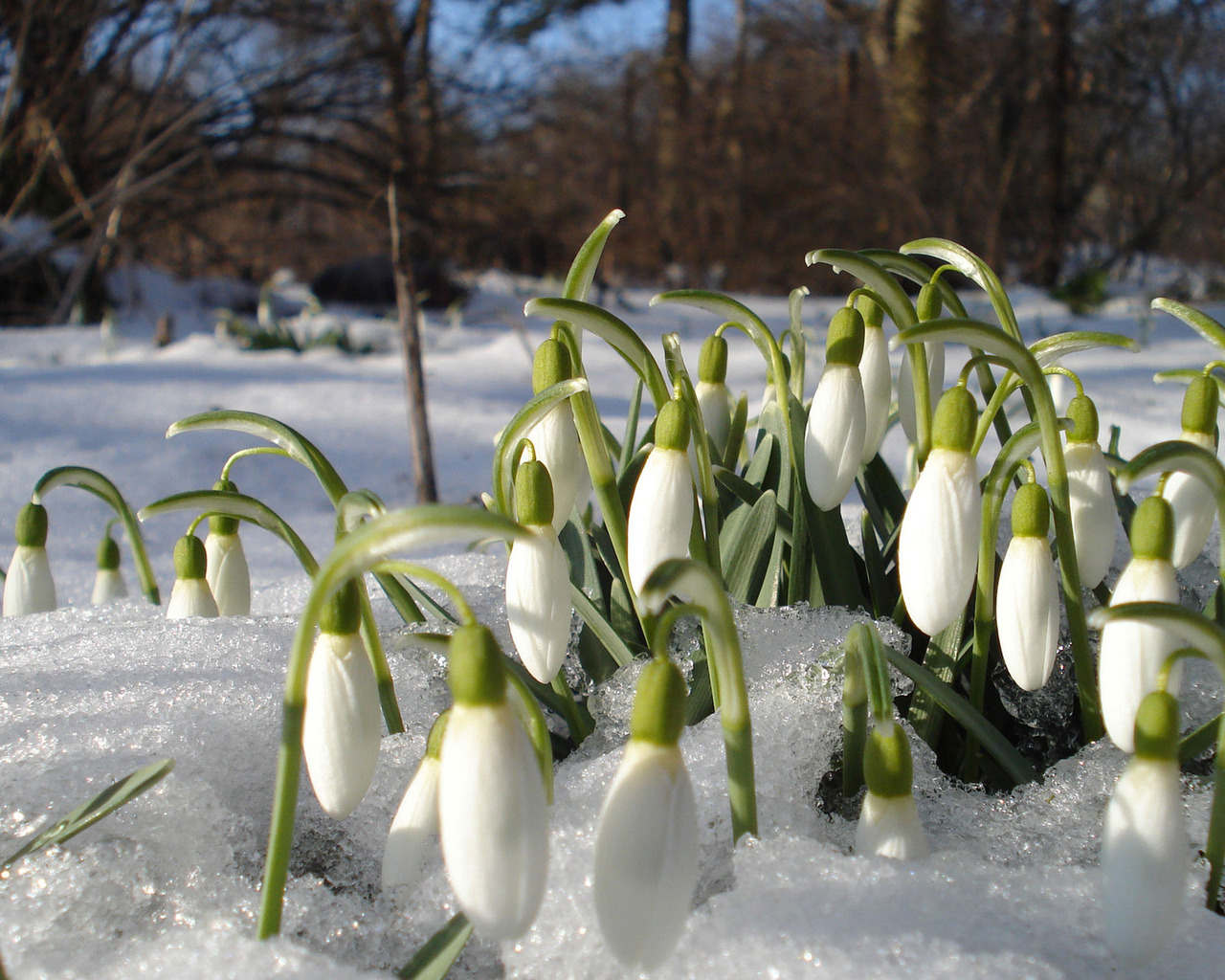Весна картинки и обои на рабочий стол