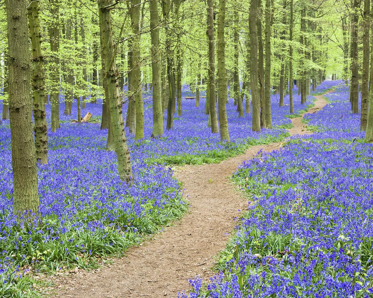 Природа англия хартфордшир