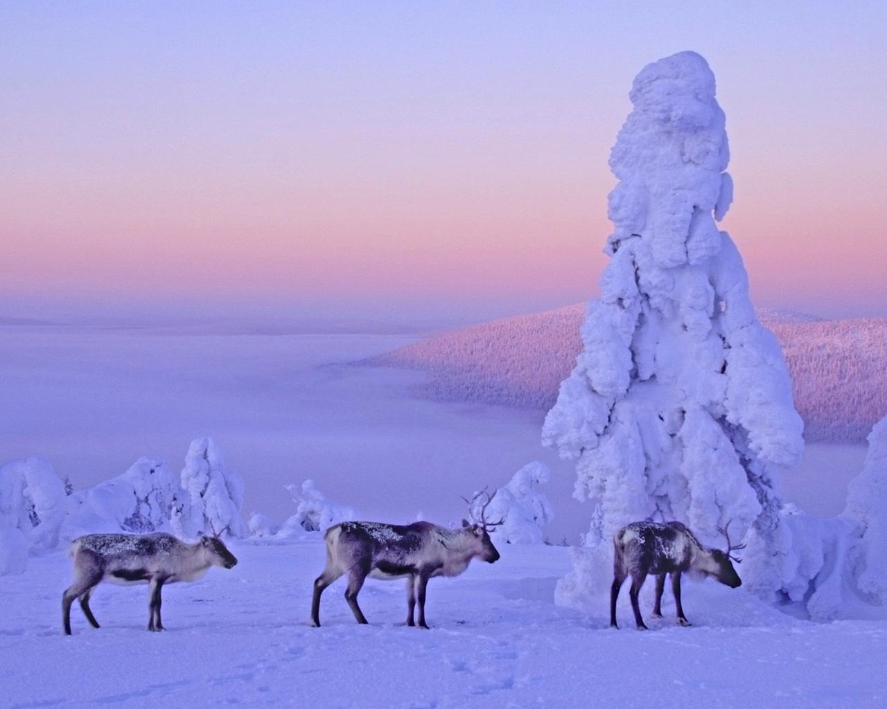 Поздравление крайнему северу